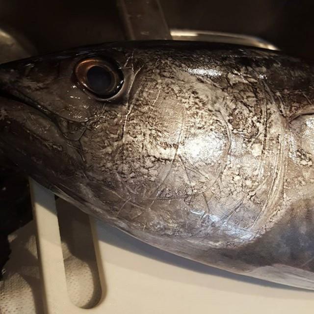 本日の魚はこちら!