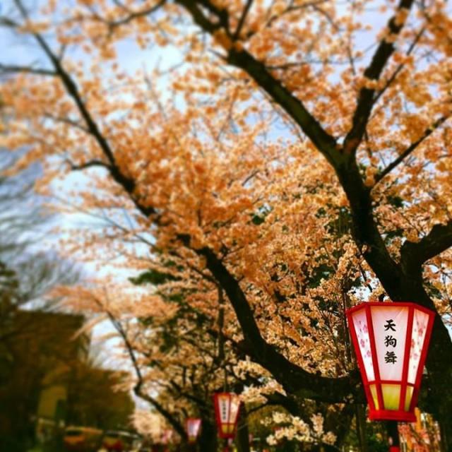 桜は散りましたが!