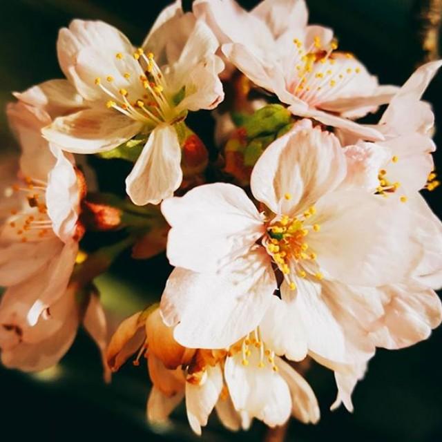 春(*´ー`*)