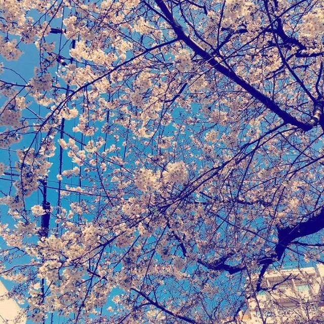 咲きましたね〜^ ^