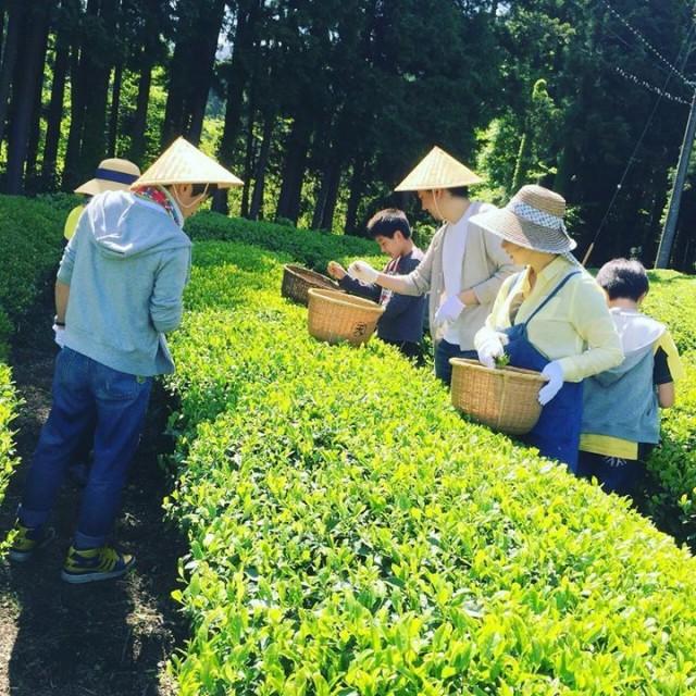 勝間田さんちの新茶割り🌱