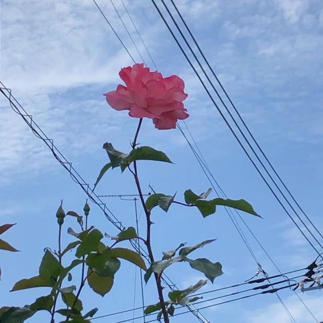 arinko6/9(火),10(水)は営業をお休みさせて頂きます🙏✨