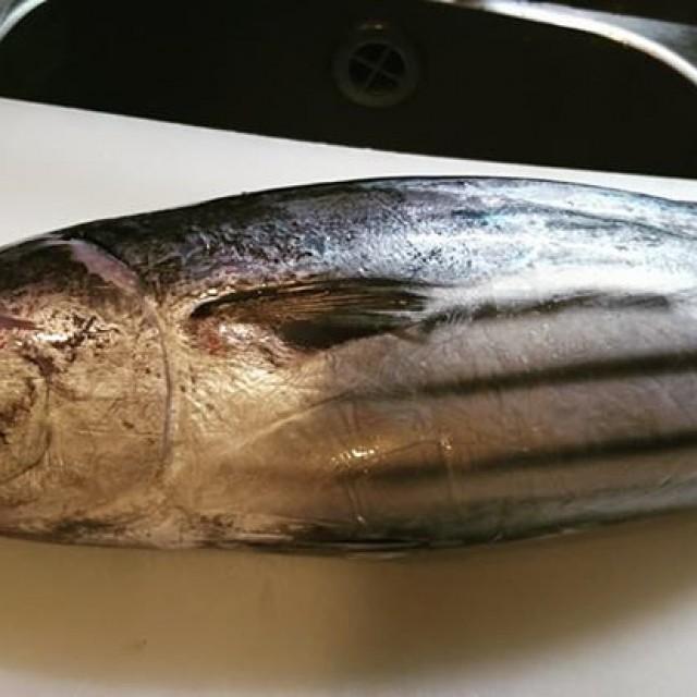 今日の鮮魚はカツオ!