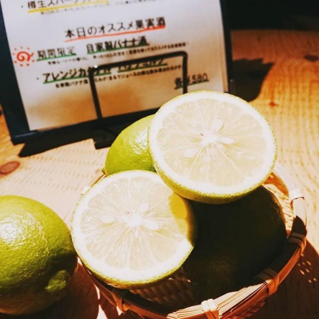 「自家製レモンサワー仕込みまーす!」